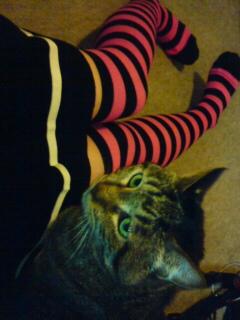 靴下とミーコ